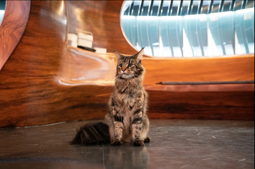A large, extremely fluffy cat sits on the floor of a spaceship. She is a queen.